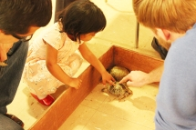 Asha touching box turtles at her birthday part at Peggy Notebeart Nature Museum